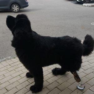 הפרוטזה של ליאו הכלב